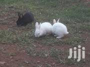 Young Rabbits | Other Animals for sale in Central Region, Kampala