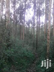Land At Mityana Mubende Road 65 Acres For Sale | Land & Plots For Sale for sale in Central Region, Mubende