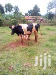 Good Bull For Sale   Other Animals for sale in Mukono, Central Region, Nigeria