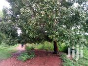 10 Acres If Land For Sale In Zirobwe Town For Sale At 8m Per Acre | Land & Plots For Sale for sale in Central Region, Kayunga