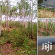 KASESE TOWN: 2 - 8 Acres  | Land & Plots For Sale for sale in Western Region, Kasese