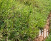 Private Mailo Land for Sale in Ssonde | Land & Plots For Sale for sale in Central Region, Kampala