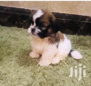 Five Puppies Looking Well and Immunised | Dogs & Puppies for sale in Central Region, Kampala