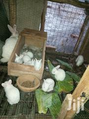Rabbit Dropping(Manure) | Feeds, Supplements & Seeds for sale in Central Region, Kampala