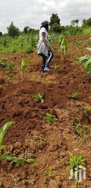 3 Acres of Land in Lunyolya Zirobwe | Land & Plots For Sale for sale in Central Region, Luweero