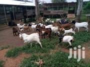 Goats | Livestock & Poultry for sale in Central Region, Mubende