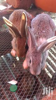 Bunnies ,Kits,Litters | Other Animals for sale in Central Region, Kampala