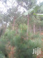 4 Acres Plus Or Pine And Banana On Sale At Mabarara Western Uganda | Land & Plots For Sale for sale in Western Region, Mbarara