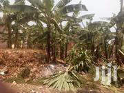 1.5 Titled Acres With Banana Plantation After Kakiri 1km Off Main Rd | Land & Plots For Sale for sale in Central Region, Wakiso