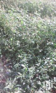 Land For Sale In Kamengo | Land & Plots For Sale for sale in Central Region, Mpigi