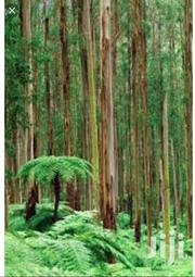 Eucalyptus Forest For Sale 9 Acres | Automotive Services for sale in Nothern Region, Yumbe