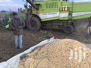 12 Tons Soybeans | Feeds, Supplements & Seeds for sale in Nothern Region, Gulu