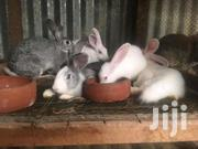 Rabbits | Livestock & Poultry for sale in Central Region, Kampala