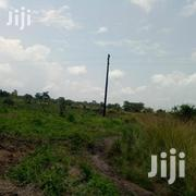 20 Acre Fertile Mailo Farmland In Kikyusa Town | Land & Plots For Sale for sale in Central Region, Luweero