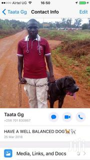 DOG TRAINING SERVICES | Dogs & Puppies for sale in Central Region, Wakiso