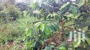 100 Titled Acres In Nakaseke Land For Sale | Land & Plots For Sale for sale in Central Region, Luweero