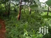 A Good Acre With  Banana Plantation On Sale In Mukono-kisoga At 30m | Land & Plots For Sale for sale in Central Region, Mukono
