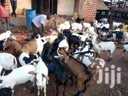 Local Goats | Other Animals for sale in Central Region, Mukono