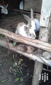 Rabbits On Sale | Livestock & Poultry for sale in Central Region, Kampala