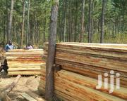 Pine Forest | Land & Plots For Sale for sale in Western Region, Masindi