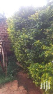 Plot For Sale | Land & Plots For Sale for sale in Eastern Region, Jinja