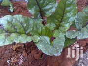 Compound Vegetable Designers | Feeds, Supplements & Seeds for sale in Central Region, Wakiso