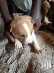 Dogs And Puppies | Dogs & Puppies for sale in Central Region, Kampala