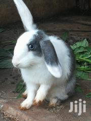 Rabbits For Sale | Other Animals for sale in Central Region, Kampala