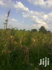 48 Acres For Sale At Bugerere Kitwe | Land & Plots For Sale for sale in Central Region, Kayunga