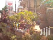 Flower Pots | Garden for sale in Central Region, Kampala