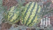 Melon And Cabbages | Feeds, Supplements & Seeds for sale in Central Region, Masaka