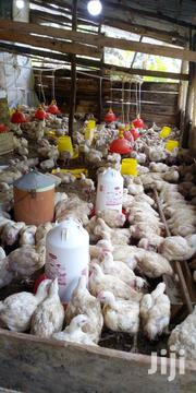 Broiler Chicken | Livestock & Poultry for sale in Central Region, Kampala