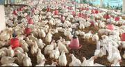 Chicken For Sale | Livestock & Poultry for sale in Central Region, Kampala