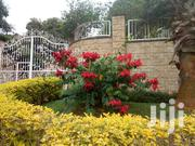 Mida'z Garden Solutions | Landscaping & Gardening Services for sale in Central Region, Kampala