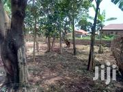 Makindye Hot Plot On Forcedsale Just 20meters Off Tarmac | Land & Plots For Sale for sale in Central Region, Kampala