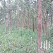 2 Plots for Sell | Land & Plots For Sale for sale in Western Region, Hoima