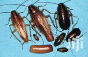 Fumigation And Pest Control Services   Cleaning Services for sale in Central Region, Kampala