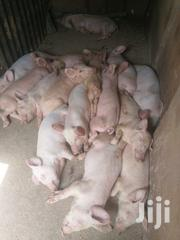 Pig Farm For Sale At Only And Only 25M | Livestock & Poultry for sale in Central Region, Wakiso