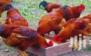 Day Old Chicken | Livestock & Poultry for sale in Central Region, Kampala