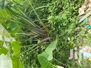 50ft by 100ft Plot With Land Title | Land & Plots For Sale for sale in Central Region, Wakiso