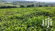 10 Acres Of Agricultural Land For Sale In Nyamabuga, Kyenjojo District | Land & Plots For Sale for sale in Western Region, Kabalore