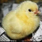 Coaks Male Chicks | Livestock & Poultry for sale in Central Region, Kampala