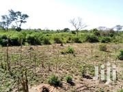20acres Of Untitled Farmland At Kasolwe Kamuli Distrist At UGX3M /Acre | Land & Plots For Sale for sale in Eastern Region, Kamuli